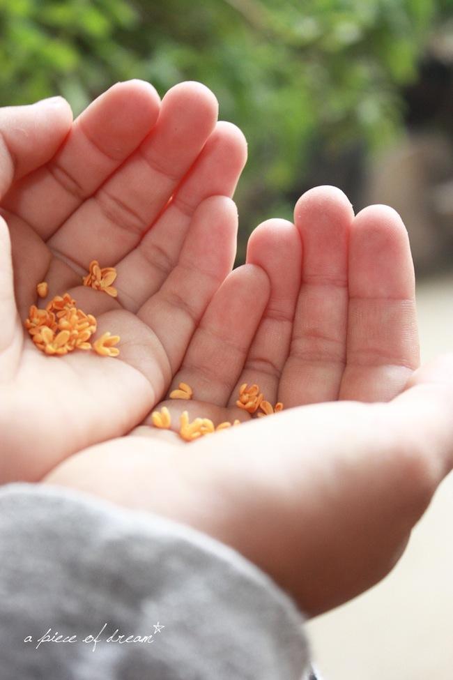 手の中の金木犀の花