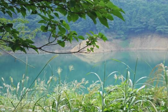 「仙人草」「キノコ」夏の終わりのお散歩でカワイイ野の花見つけました。