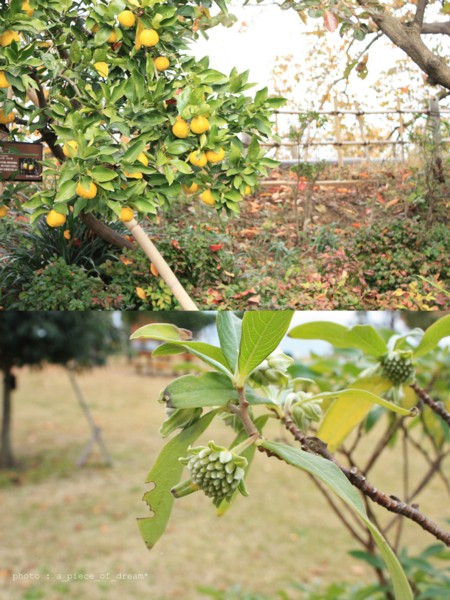 野ばら・シャリンバイ・へくそかずら。秋の木の実を探しにでかよう。