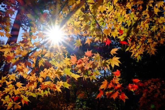 森の声に心躍る赤城自然園の四季