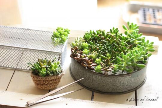 『週末DIY』切って、挿すだけ!「多肉植物」の「さし穂インテリア」をはじめませんか?