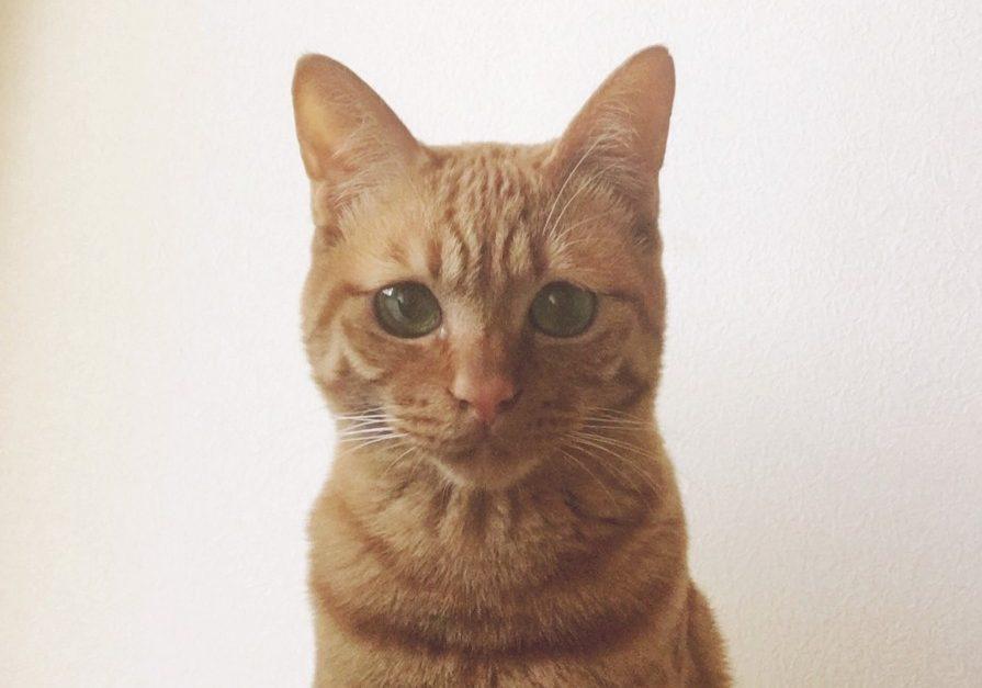 DIY初心者が挑戦!猫のハンモック『にゃんモック』を作ってみた!
